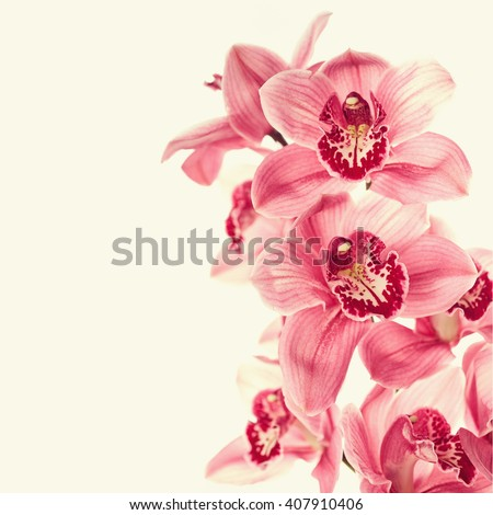 Vintage photo with orchid flowers  - stock photo