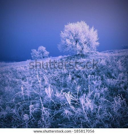 Vintage picture. Misty winter valley with beautiful trees in a rime - stock photo
