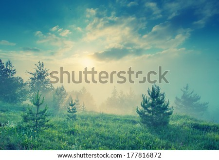 Vintage picture. Sunset of foggy valley  - stock photo