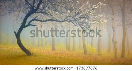 Vintage picture with flowering tree in the misty spring forest - stock photo