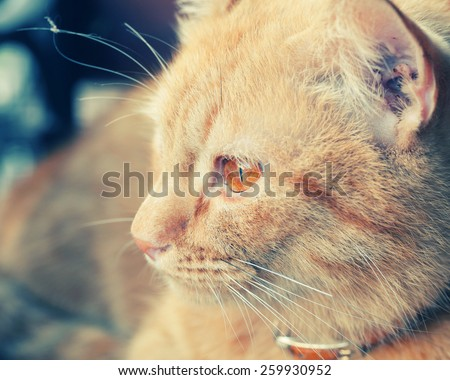 vintage portrait of a red cat with retro filter effect . focus at eye - stock photo