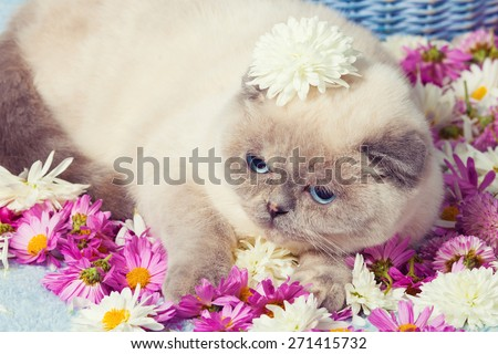Vintage portrait of cute siamese cat having a rest on the flowers - stock photo