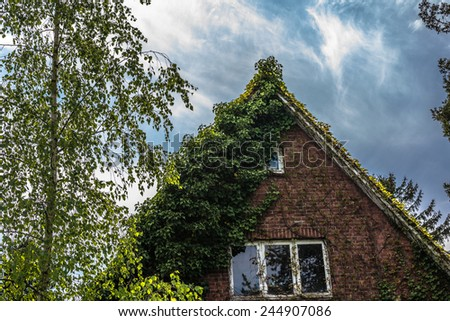 Vintage residential house with clinker facade covered with green creeper  Gable of residential house with clinker facade covered with green creeper against blue sky and beside a tall tree - stock photo