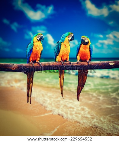 Vintage retro effect filtered hipster style image of  tropical vacation concept - three parrots (Blue-and-Yellow Macaw (Ara ararauna) aka the Blue-and-Gold Macaw ) on tropical beautiful beach and  sea - stock photo