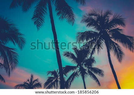 Vintage Retro Filtered Hawaii Palm Trees At Sunset - stock photo