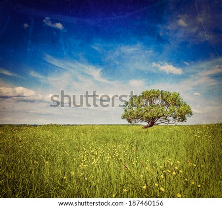Vintage retro hipster style travel image of   grass field meadow scenery lanscape under blue sky with single lonely tree with grunge texture overlaid - stock photo