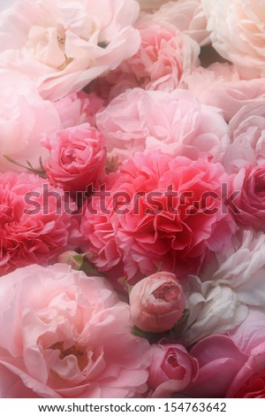 Vintage roses. - stock photo