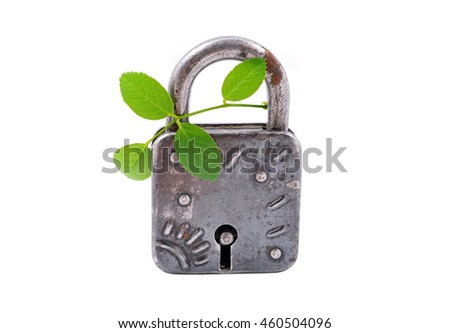 Vintage rusty padlock and green plant, isolated on white background - stock photo