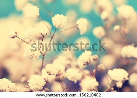 vintage small white flowers close up - stock photo