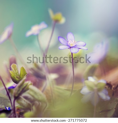 vintage soft wild lilac flowers on green nature background in forest - stock photo