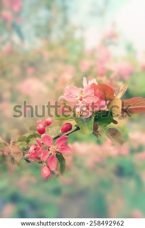 Vintage Spring flowers background - stock photo