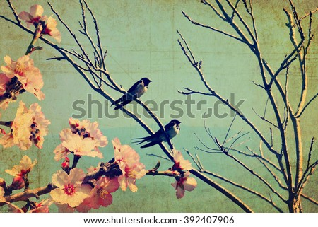 Vintage spring image with swallows and tree  blossom.Textured old paper background with conceptual nature springtime image  - stock photo