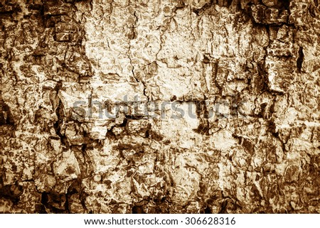 Vintage style - Abstract tree bark texture - stock photo