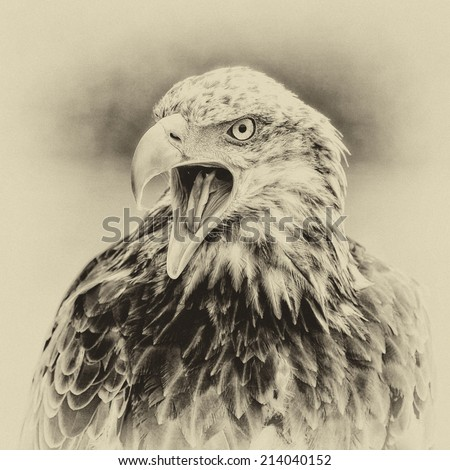 Vintage style black and white image of a Bald Eagle - stock photo