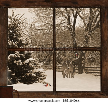 Vintage style Christmas card background, with a view of a mother, and baby deer, and a pair of cardinals, seen through a grunge farm house window with a cup of steaming coffee on the windowsill.  - stock photo
