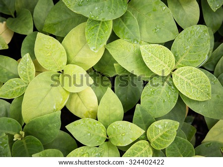 vintage style green fresh. Rain drops on fresh green leaves.Green background with leaves. - stock photo