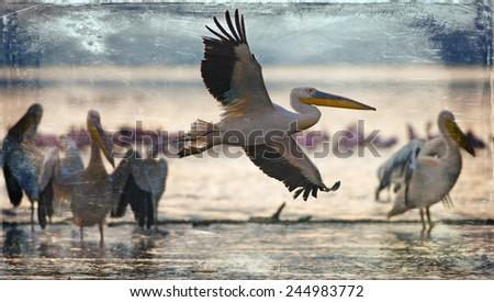 Vintage style image of white pelicans at Lake Nakuru, Kenya, Eastern Africa - stock photo