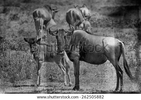 Vintage style image of Wildebeests in the Serengeti National Park, Tanzania - stock photo