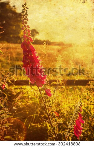 vintage style picture of a foxglove flower growing wayside - stock photo