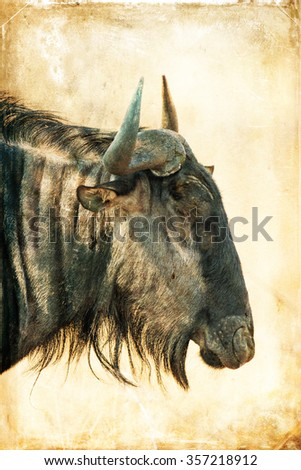 Vintage style portrait of a blue wildebeest antelope in the South Luangwa National Park, Zambia. The concentration of animals around the Luangwa River is among the most intense in Africa. - stock photo