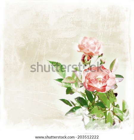 vintage style rose on old paper for scrap-booking design - stock photo
