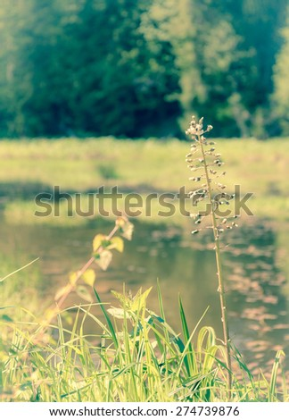 Vintage style small pond in the middle of forest - stock photo
