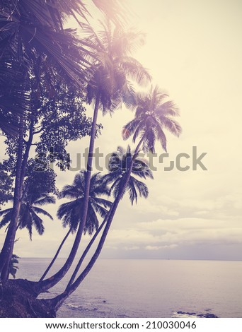 Vintage stylized tropical beach with palm tree at sunset  - stock photo