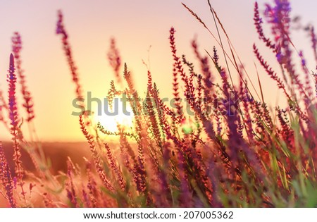 vintage summer flowers on sunset, natural background with instagram effect - stock photo