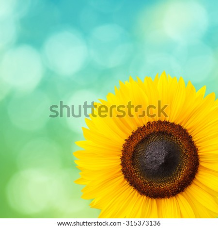 Vintage sunflower on green natural background - stock photo