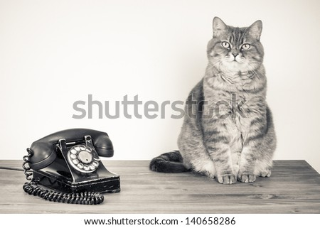Vintage telephone and cat on table old style photo - stock photo