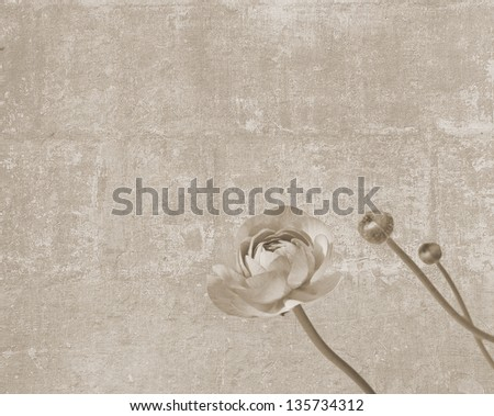 Vintage texture with peony flower and two buds - stock photo