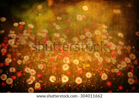 vintage textured picture of daisy flowers - stock photo