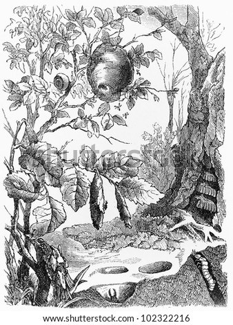 Vintage 19th century drawing representing various types of beez and ground insects - Picture from Meyers Lexikon book (written in German language) published in 1908 Leipzig - Germany. - stock photo