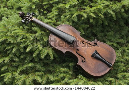 Vintage violin, minus strings, lying in a pine tree.