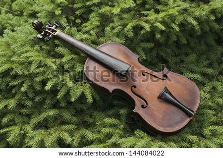 Vintage violin, minus strings, lying in a pine tree. - stock photo