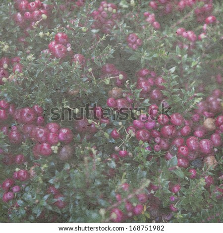 vintage wallpaper background with Holly bush with red berries - stock photo