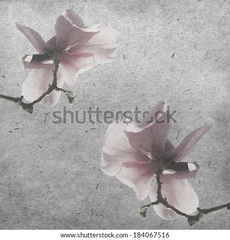 vintage wallpaper background with spring magnolia tree flowers - stock photo