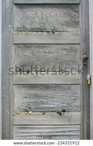 Vintage weathered gray door with moss growing - stock photo
