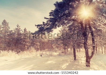 Vintage winter morning, sun rays shine through branches - stock photo