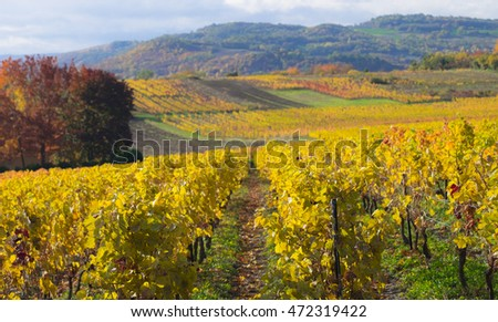 Vinyards in the Auvergne, France