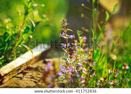 violet and dark-blue flowers and green grass with piece of concrete on the nature background with ray of sun,summer,vacation,relax romantic,fresh spring - stock photo