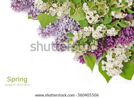 Violet and white lilac flowers isolated on white with sample text
