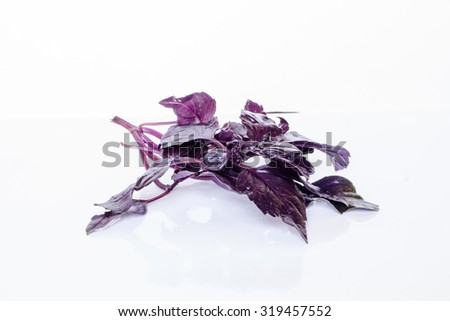Violet basil herb. Leaf plant food ingredient. Fresh healthy raw organic aromatic spice isolated on white background. Natural herbal freshness. - stock photo
