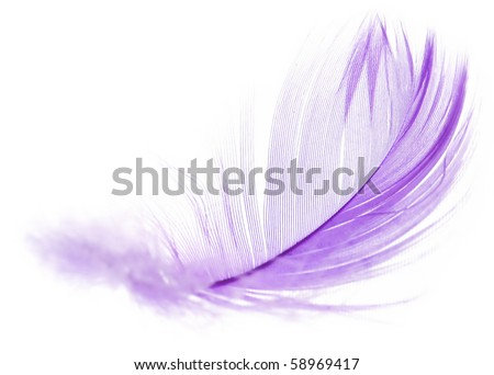 Violet Feather in soft-focus view. Close-Up. With white background - Isolated. - stock photo