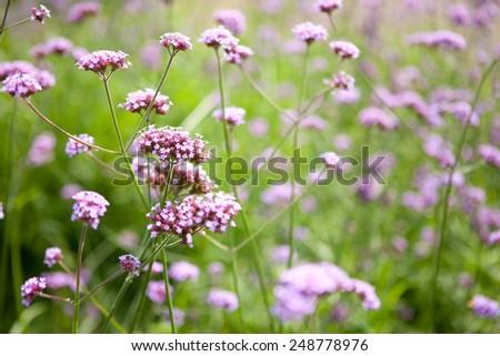 Violet flower background. - stock photo