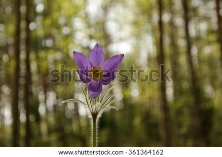 violet flower in a forest