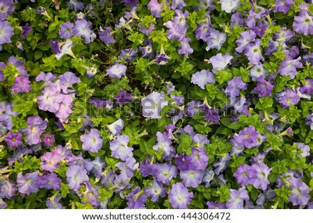 violet flowers background in the park