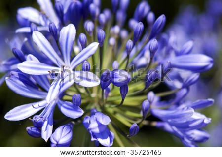 Violet Flowers Close-up - stock photo