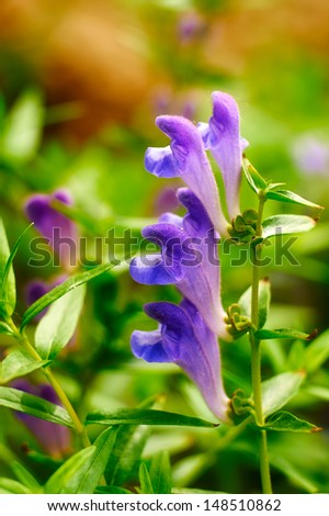 Violet flowers close-up. The photo taken in China's heilongjiang province daqing city Tieren park.