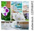 Violet flowers collection - stock photo